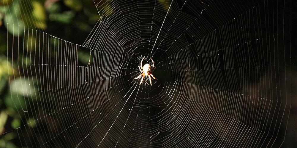 1280px-Araneus_diadematus_web_1